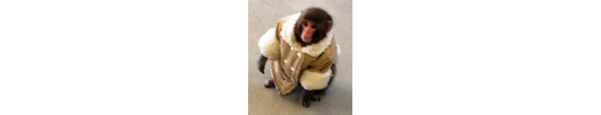 Your agile project without floating scope is still a monkey under a winter coat
